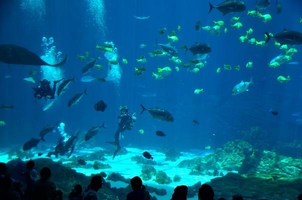 【各名所】サンピアザ水族館